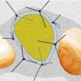 Implantation in der ästhetisch sensiblen Zone